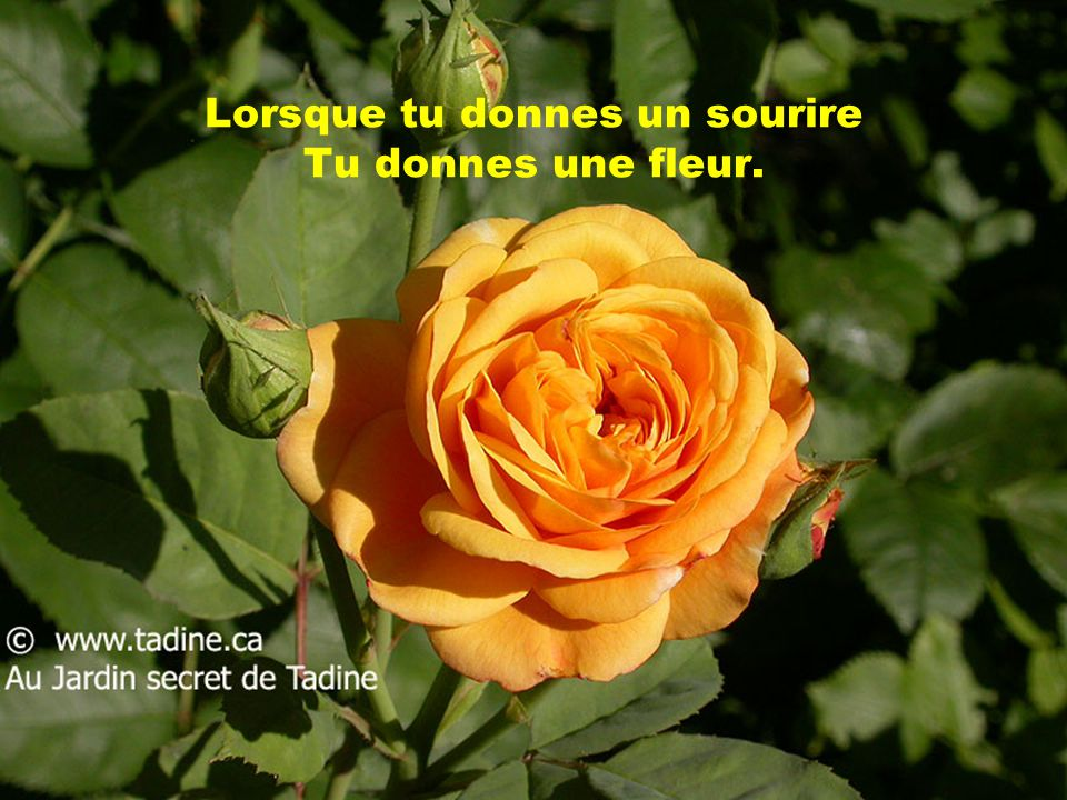 Lorsque tu donnes un sourire Tu donnes une fleur.