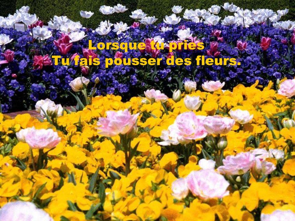 Lorsque tu pries Tu fais pousser des fleurs.