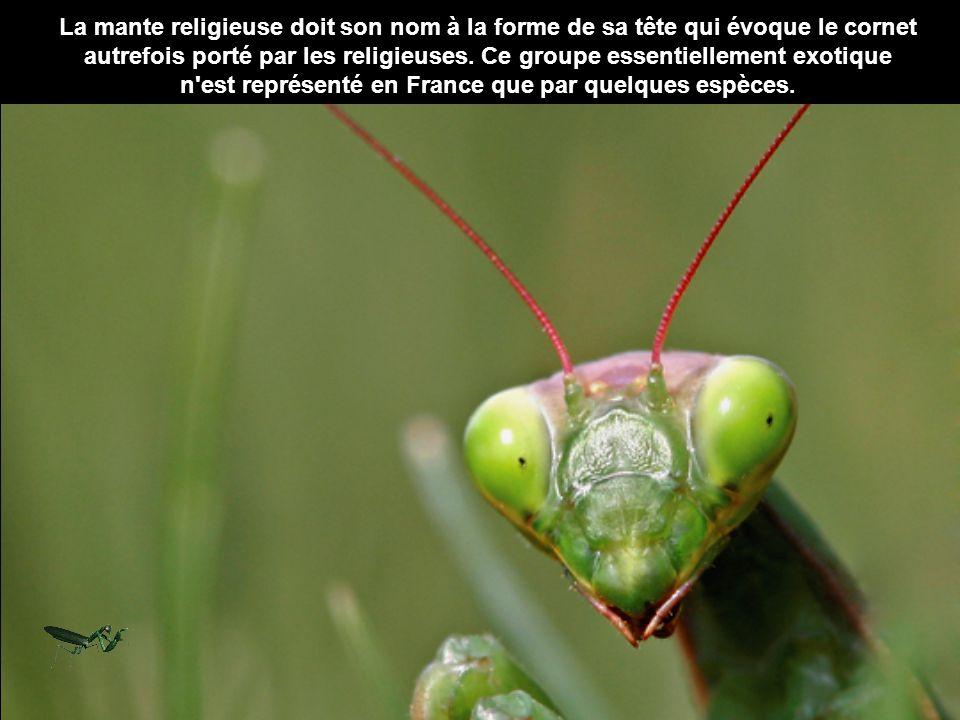 n est représenté en France que par quelques espèces.