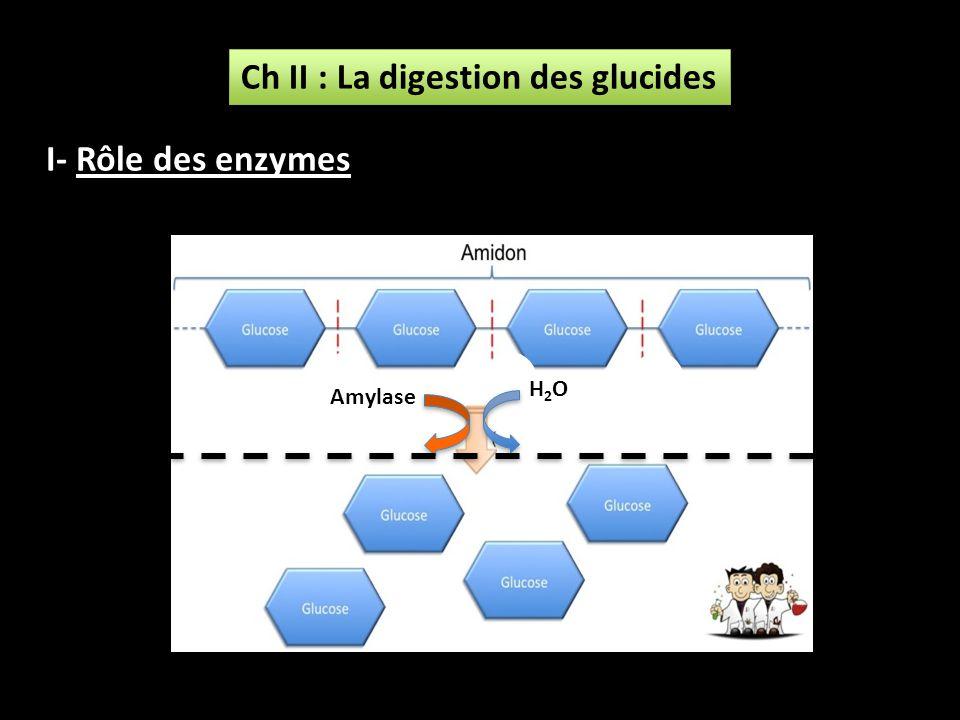 Ch II : La digestion des glucides