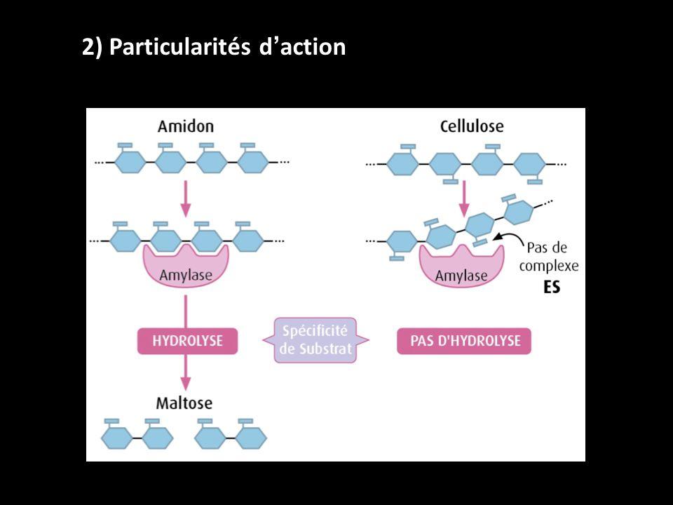 2) Particularités d'action