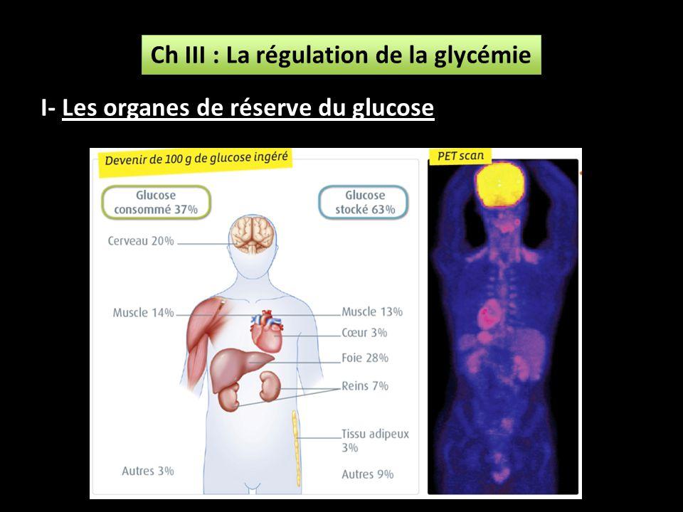 Ch III : La régulation de la glycémie