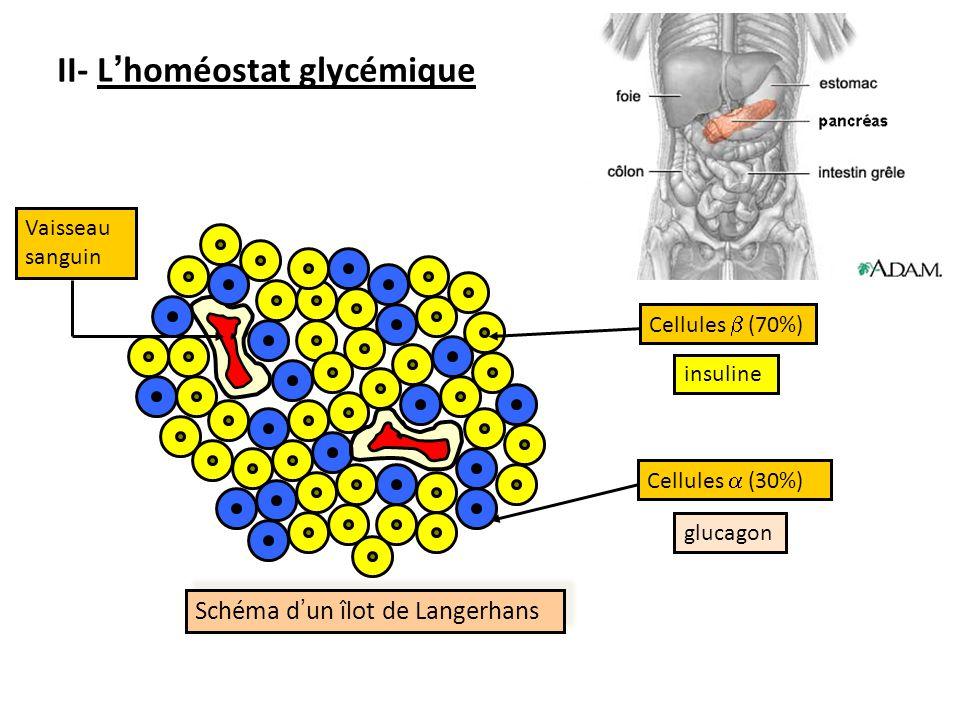 II- L'homéostat glycémique