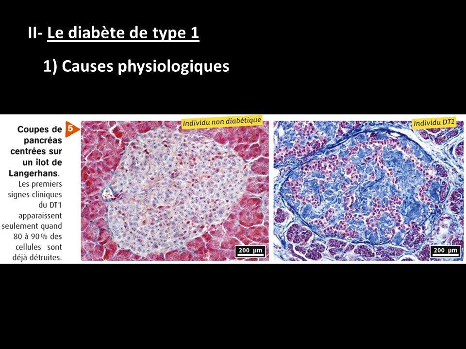 II- Le diabète de type 1 1) Causes physiologiques