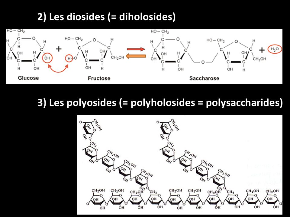 2) Les diosides (= diholosides)