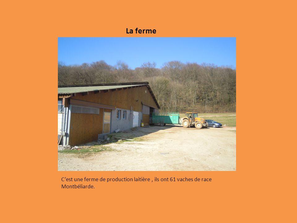 La ferme C'est une ferme de production laitière , ils ont 61 vaches de race Montbéliarde.