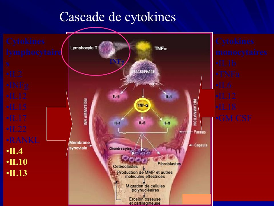 Cascade de cytokines Cytokines lymphocytaires IL2 INFg IL12 IL15 IL17