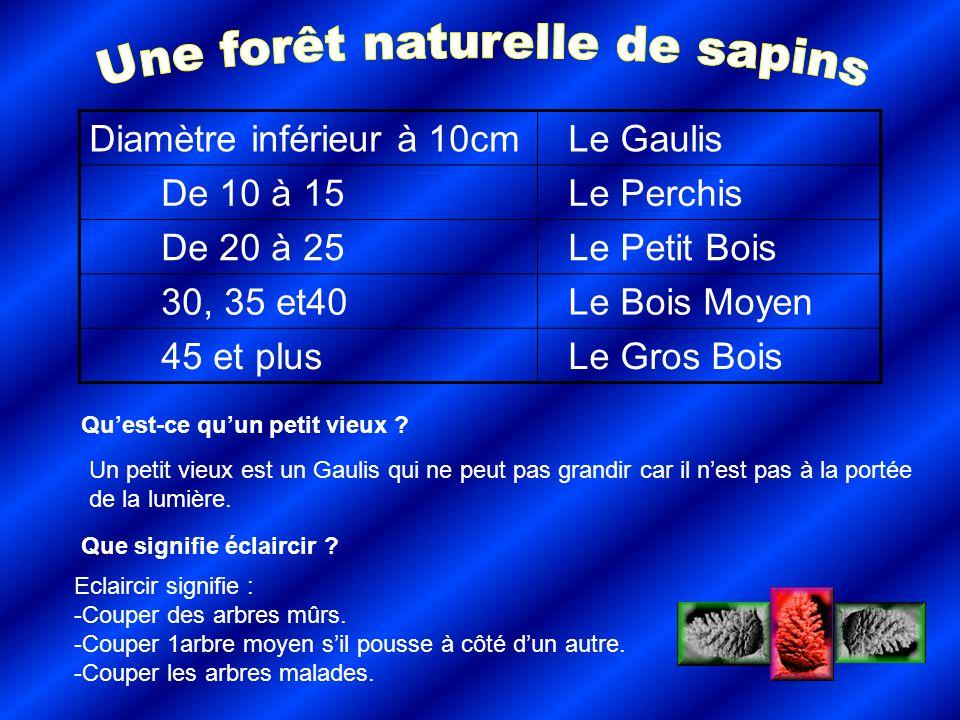 Une forêt naturelle de sapins