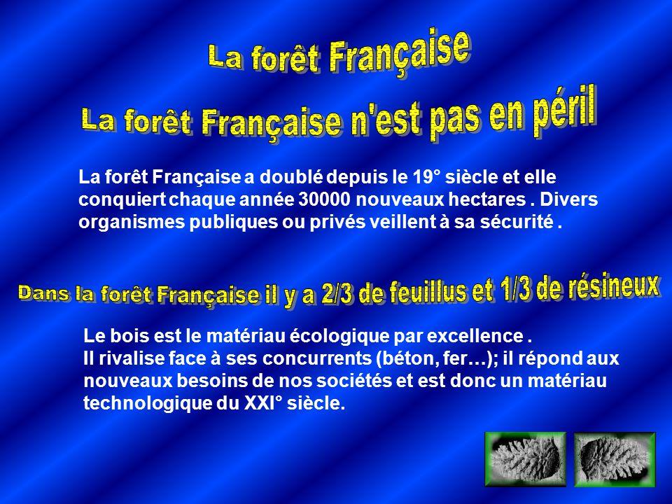 La forêt Française n est pas en péril