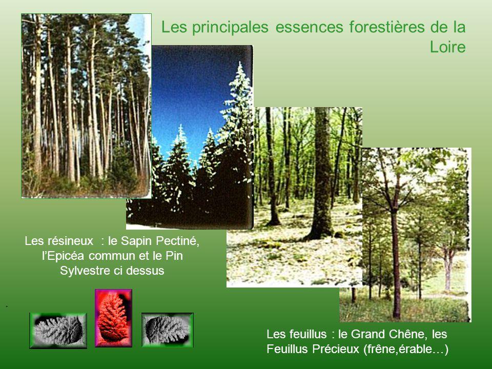 . Les principales essences forestières de la Loire