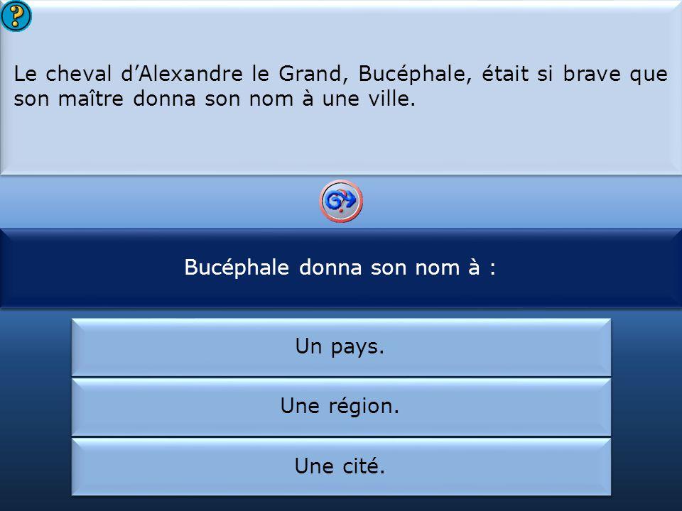 Bucéphale donna son nom à :