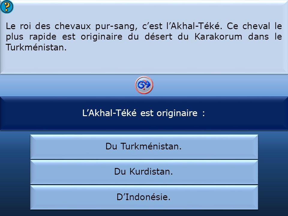 L'Akhal-Téké est originaire : L'Akhal-Téké est :