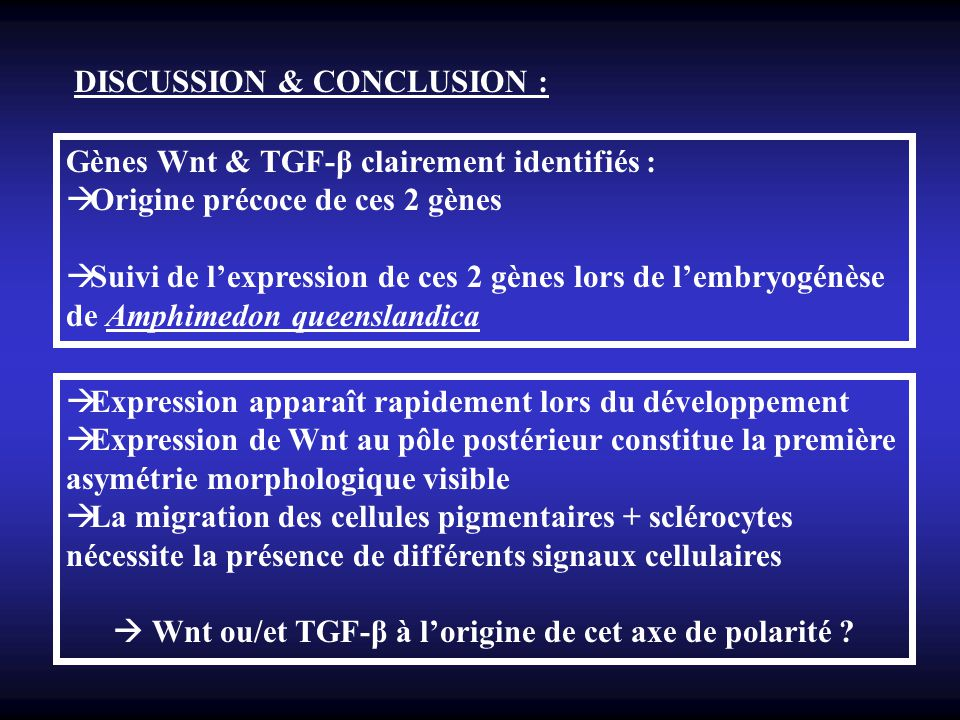 Wnt ou/et TGF-β à l'origine de cet axe de polarité