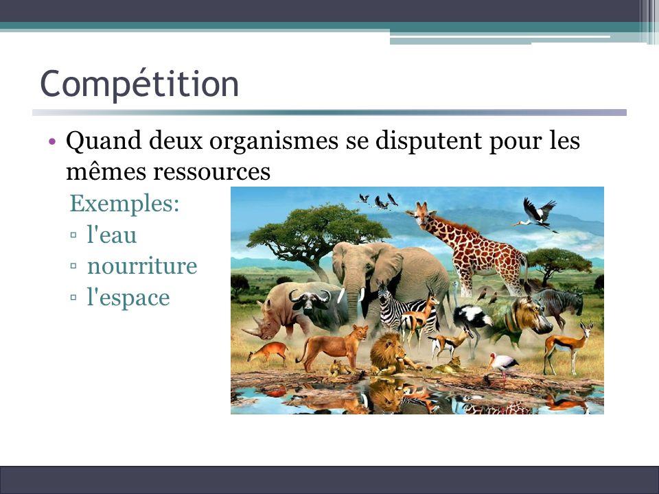 Compétition Quand deux organismes se disputent pour les mêmes ressources. Exemples: l eau. nourriture.