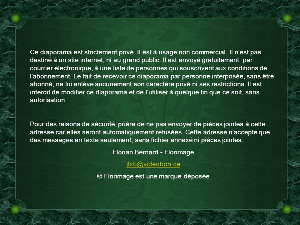 Florian Bernard - Florimage jfxb@videotron.ca