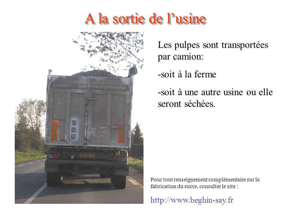 A la sortie de l'usine Les pulpes sont transportées par camion: