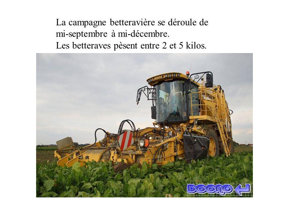 La campagne betteravière se déroule de mi-septembre à mi-décembre.