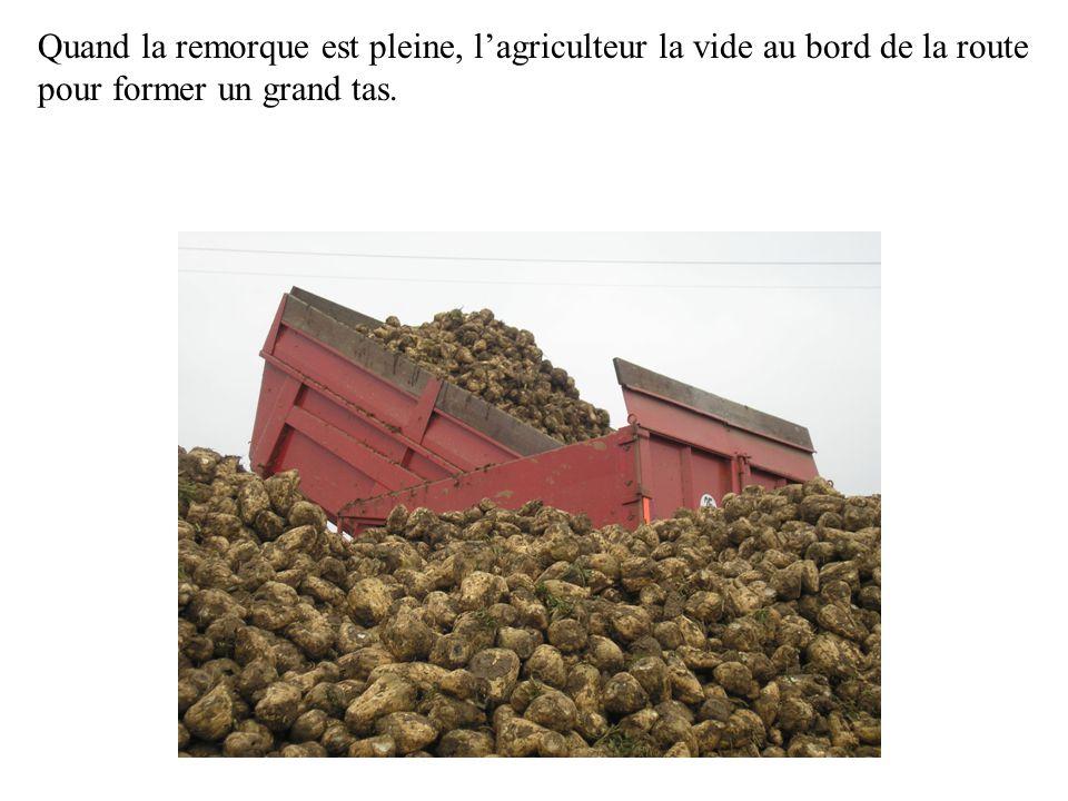 Quand la remorque est pleine, l'agriculteur la vide au bord de la route pour former un grand tas.