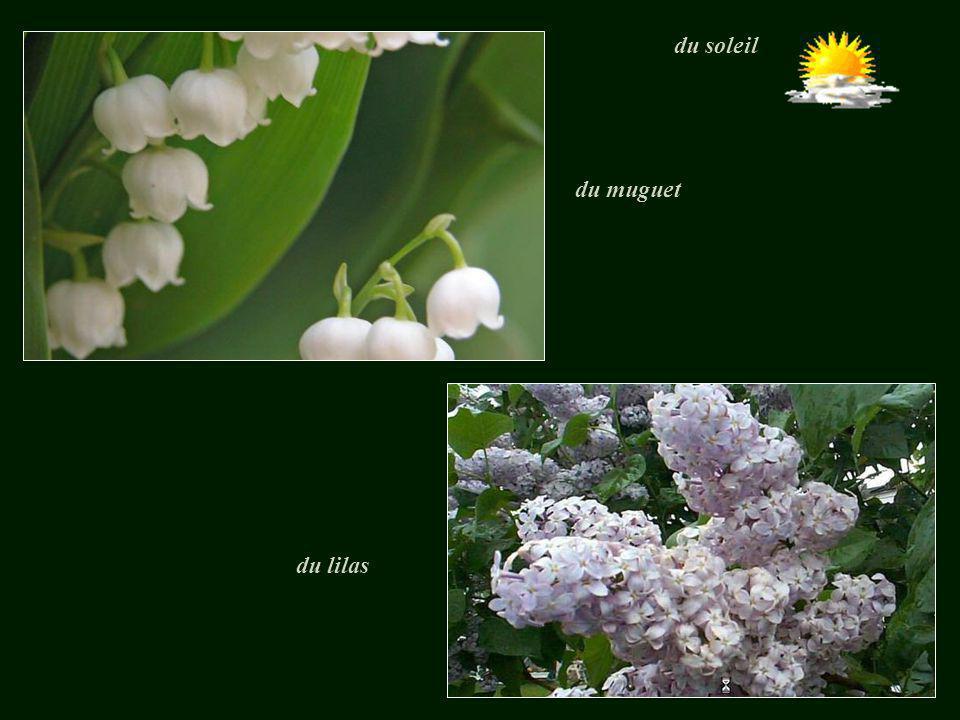 du soleil du muguet du lilas
