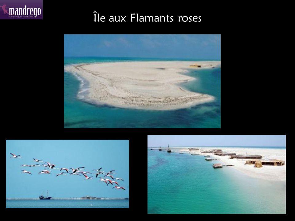 Île aux Flamants roses