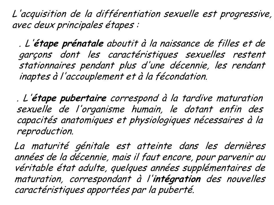 L acquisition de la différentiation sexuelle est progressive, avec deux principales étapes :