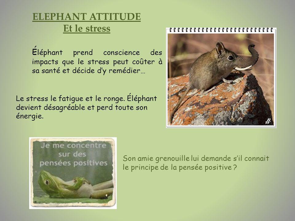 ELEPHANT ATTITUDE Et le stress
