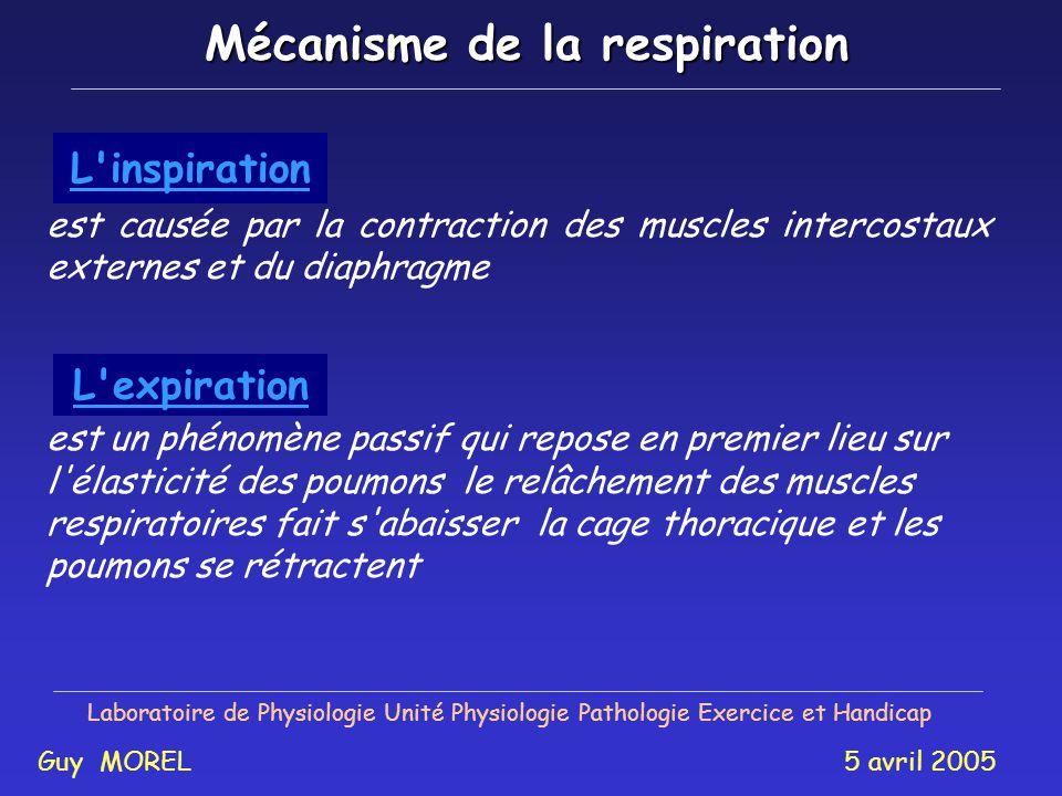 Mécanisme de la respiration