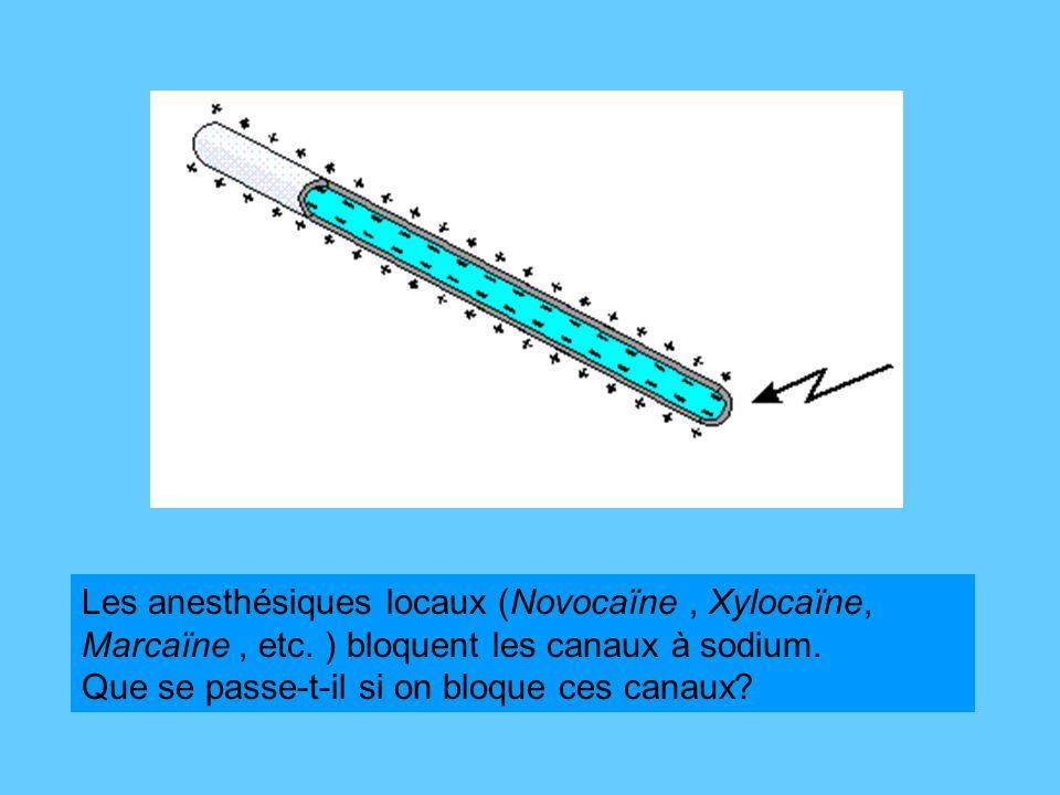 Les anesthésiques locaux (Novocaïne , Xylocaïne, Marcaïne , etc