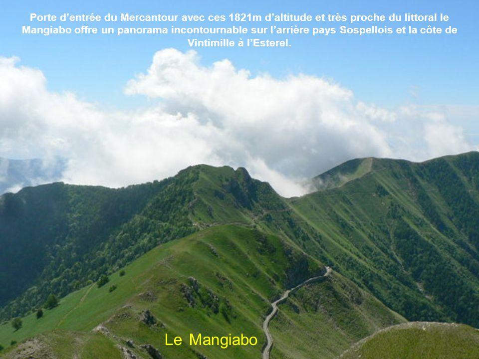 Porte d'entrée du Mercantour avec ces 1821m d'altitude et très proche du littoral le Mangiabo offre un panorama incontournable sur l'arrière pays Sospellois et la côte de Vintimille à l'Esterel.