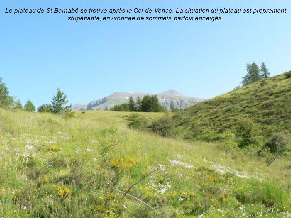 Le plateau de St Barnabé se trouve après le Col de Vence