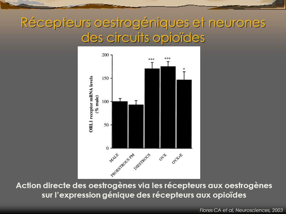 Récepteurs oestrogéniques et neurones des circuits opioïdes