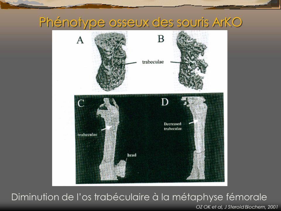 Phénotype osseux des souris ArKO