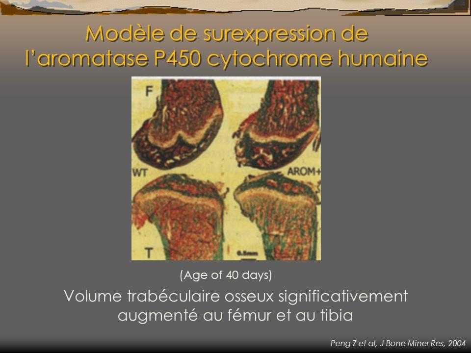 Modèle de surexpression de l'aromatase P450 cytochrome humaine