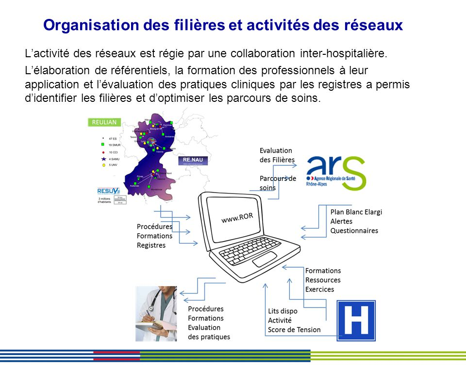 Organisation des filières et activités des réseaux