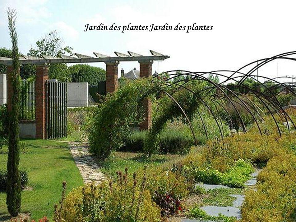 Jardin des plantes Jardin des plantes