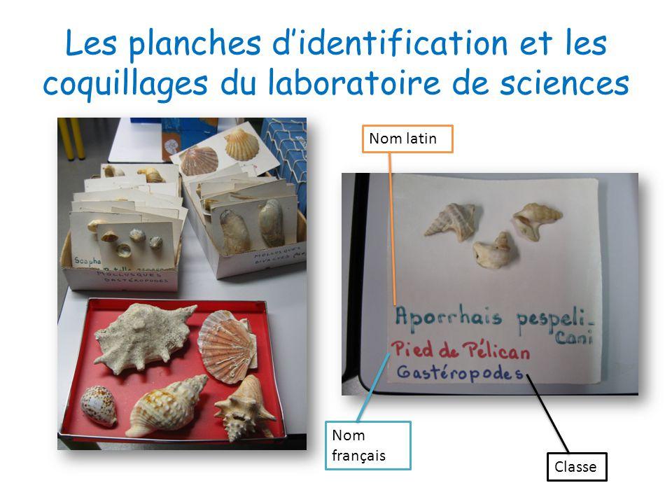 Les planches d'identification et les coquillages du laboratoire de sciences