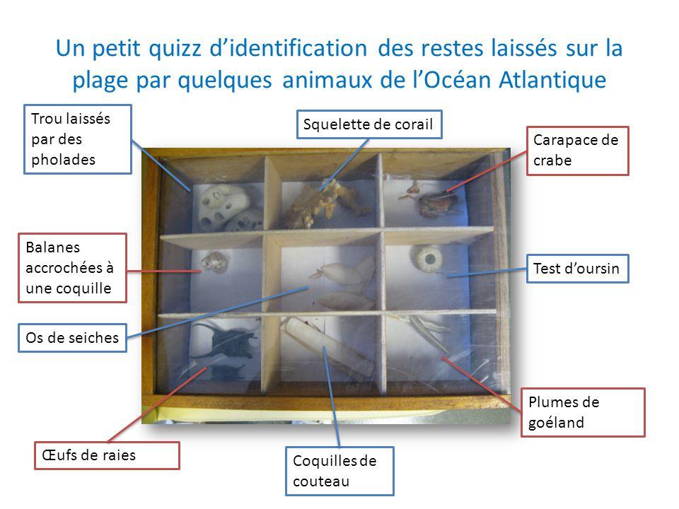 Un petit quizz d'identification des restes laissés sur la plage par quelques animaux de l'Océan Atlantique