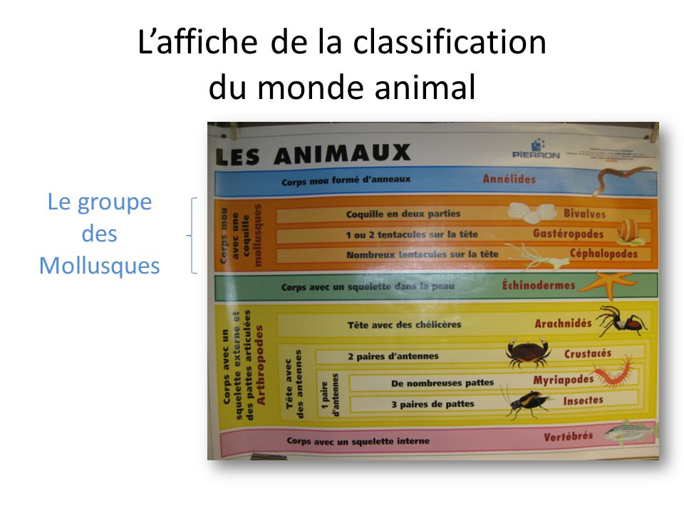 L'affiche de la classification du monde animal