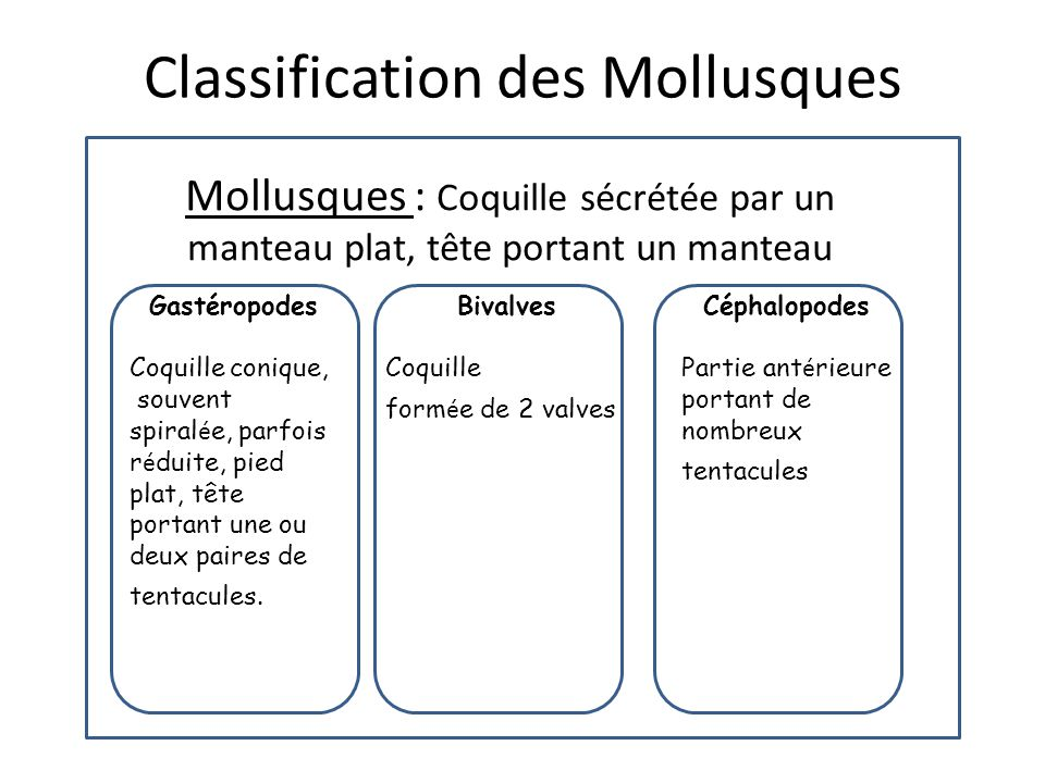 Classification des Mollusques