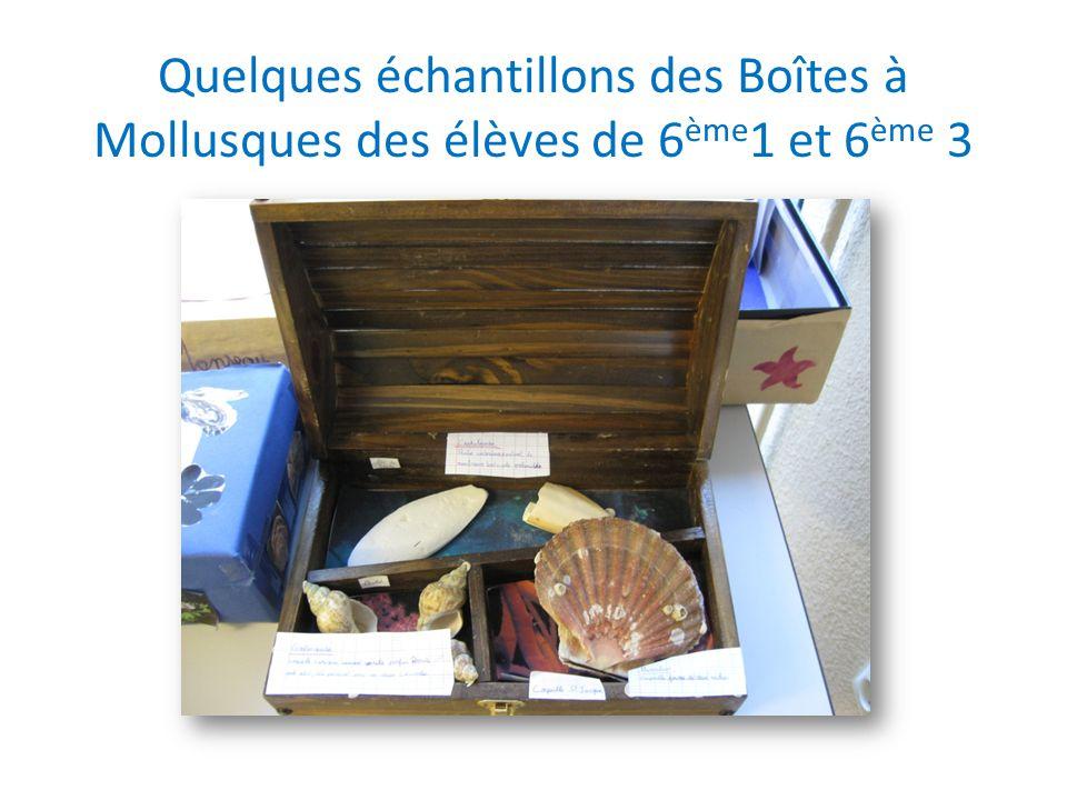 Quelques échantillons des Boîtes à Mollusques des élèves de 6ème1 et 6ème 3