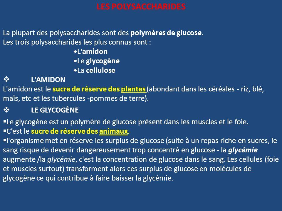 LES POLYSACCHARIDESLa plupart des polysaccharides sont des polymères de glucose. Les trois polysaccharides les plus connus sont :