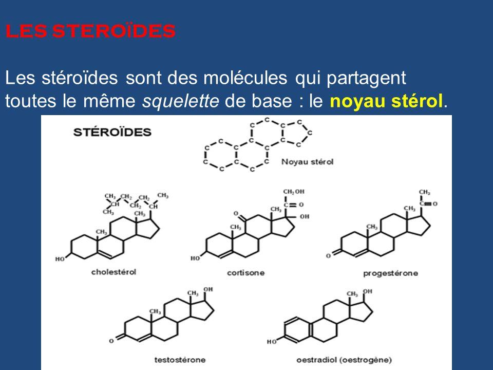 LES STEROÏDES Les stéroïdes sont des molécules qui partagent.