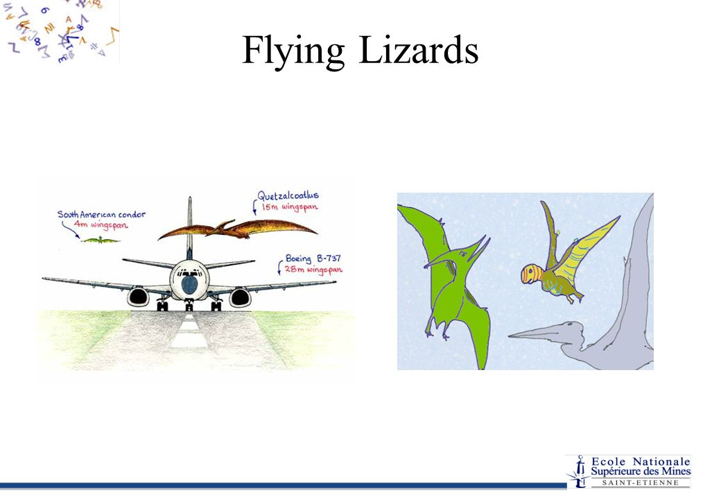Flying Lizards