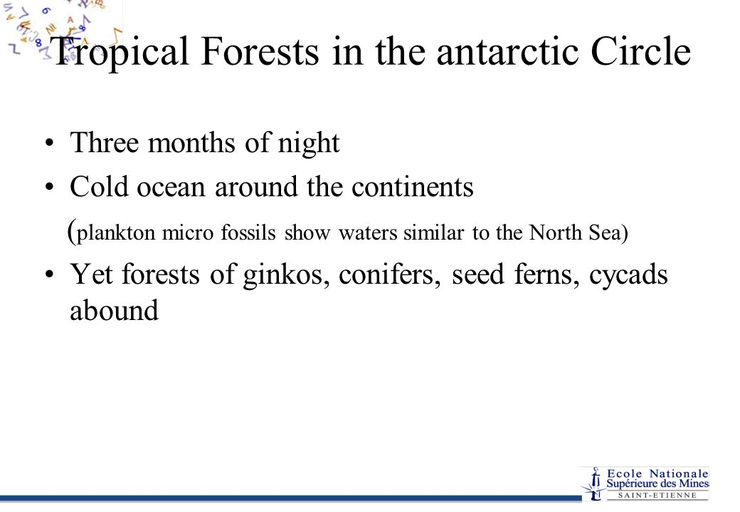 Tropical Forests in the antarctic Circle