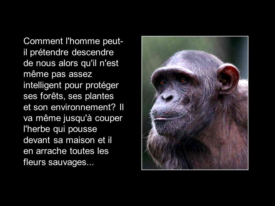 Comment l homme peut-il prétendre descendre de nous alors qu il n est même pas assez intelligent pour protéger ses forêts, ses plantes et son environnement.