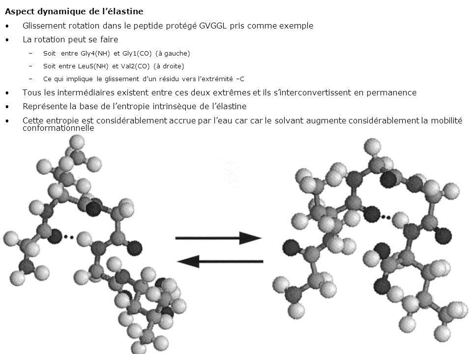Mardi 12 février 2008 Aspect dynamique de l'élastine. Glissement rotation dans le peptide protégé GVGGL pris comme exemple.