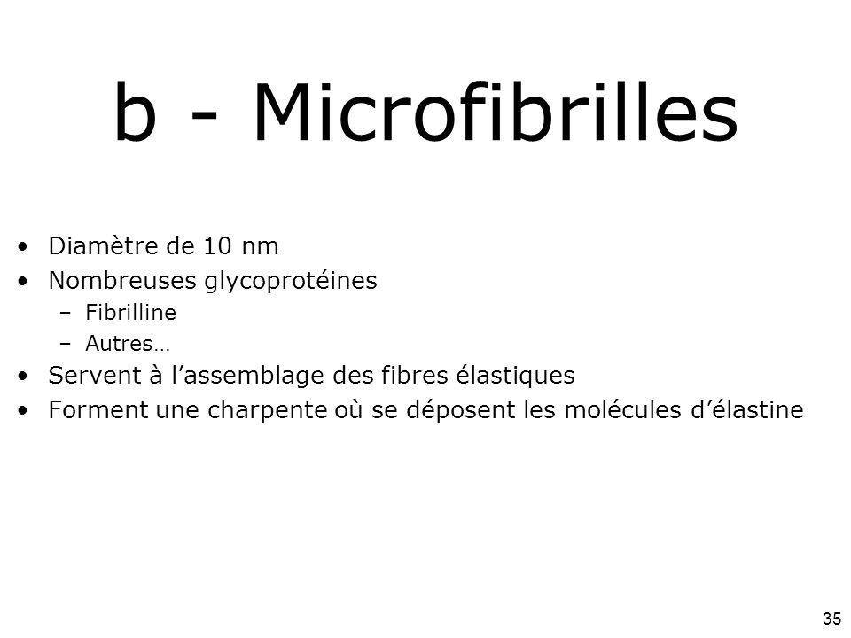b - Microfibrilles #13p1103 Diamètre de 10 nm