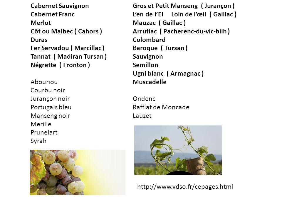 Cabernet Sauvignon Cabernet Franc. Merlot. Côt ou Malbec ( Cahors ) Duras. Fer Servadou ( Marcillac )