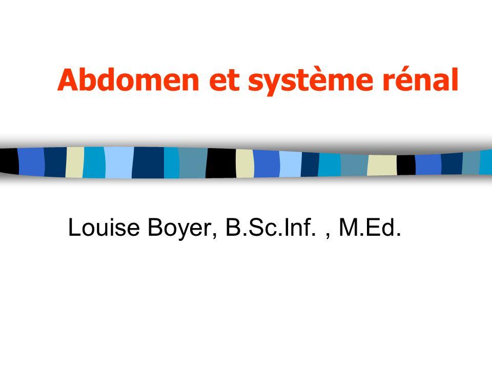 Abdomen et système rénal