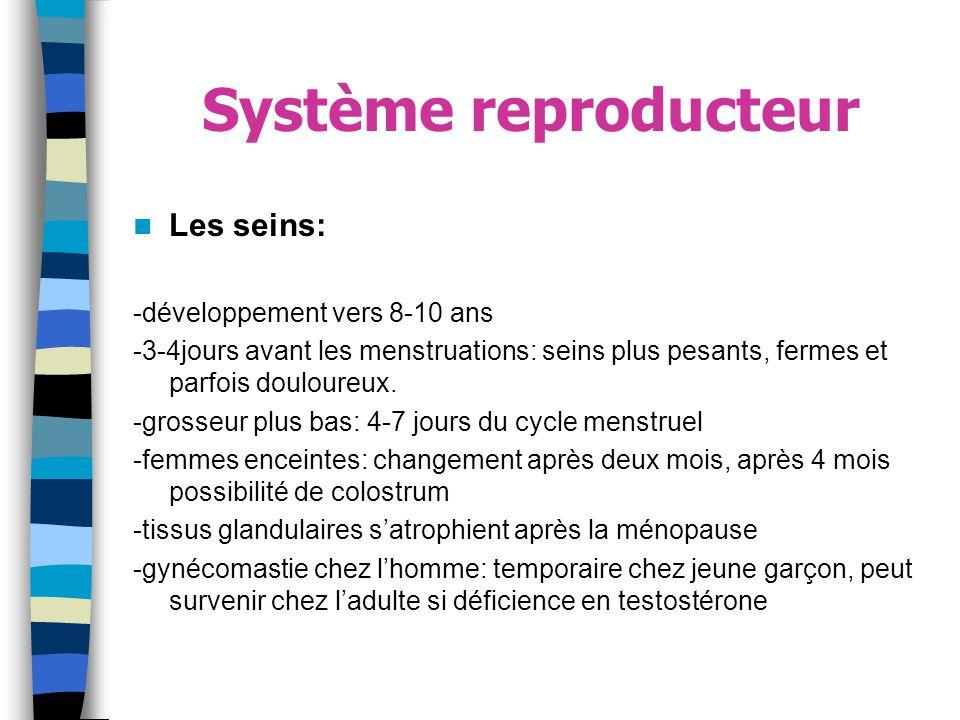 Système reproducteur Les seins: -développement vers 8-10 ans